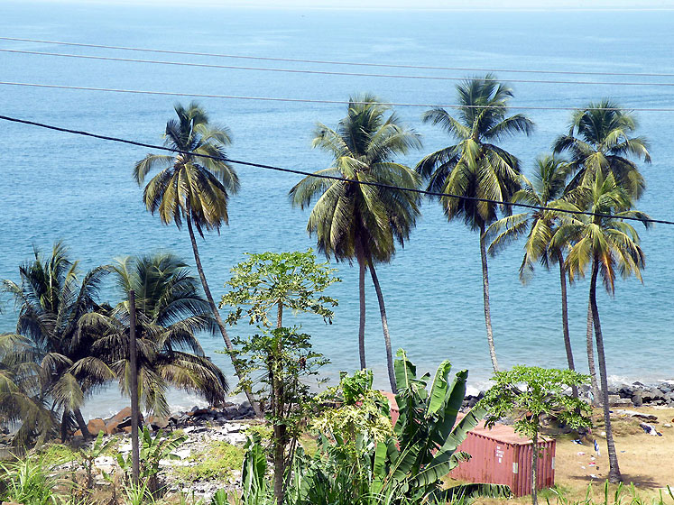 World Travel Photos :: Liberia - Monrovia :: Palm @ beach  Monrovia, Liberia
