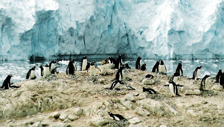 World Travel Photos :: Antarctica :: Antarctica