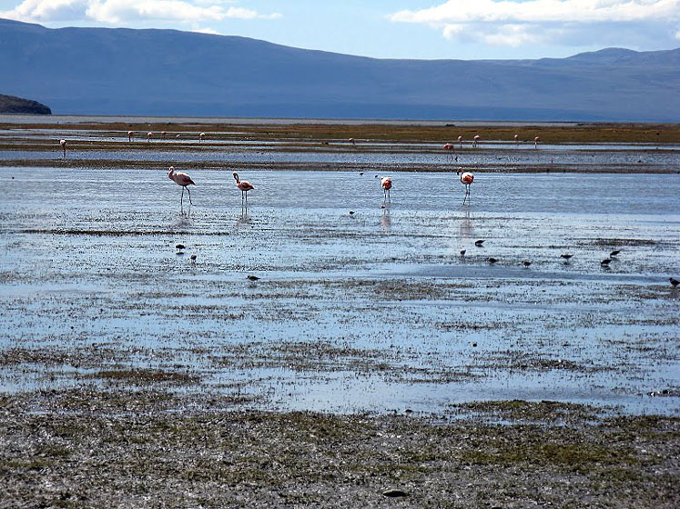 World Travel Photos :: Landscapes :: Argentina. Flamingo