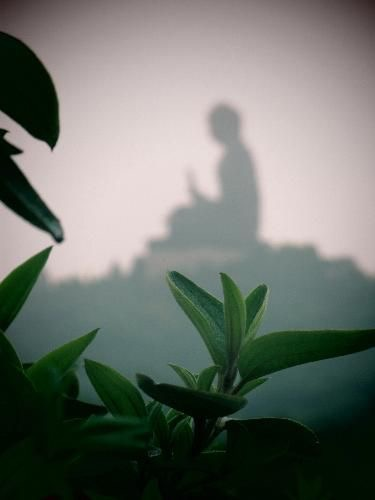 World Travel Photos :: Alesia :: Hong-Kong. Buddha.