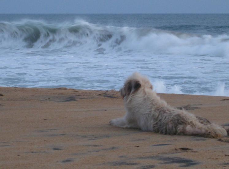 World Travel Photos :: Sea & ocean views :: Liberia´s Beaches - a dog on the beach