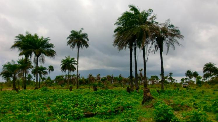 World Travel Photos :: Liberia - Monrovia :: Monrovia,Liberia - Green Liberia landscape