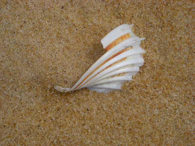 World Travel Photos :: Sea & ocean views :: Liberia, Africa - a sea shell