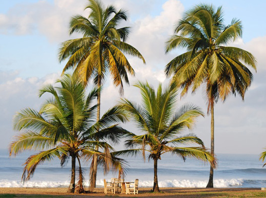 World Travel Photos :: Liberia - Monrovia :: Palm Trees on Beach @ Monrovia,Liberia