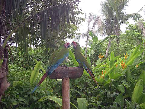 World Travel Photos :: Mexico - Cancun :: Cancun. Parrots in Xcaret Park