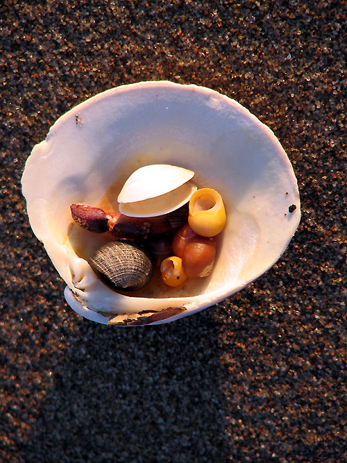 World Travel Photos :: Feel good photos :: Nova Scotia. Sea shells in Port Hood