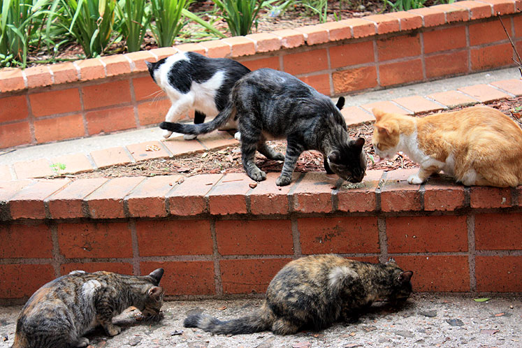 World Travel Photos :: Puerto-Rico - San Juan :: Puerto-Rico. San Juan - street cats