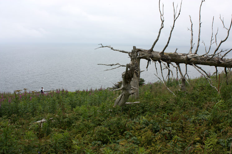 World Travel Photos :: Canada - Quebec - Bonaventure Island :: Quebec. Bonaventure Island - a fallen tree