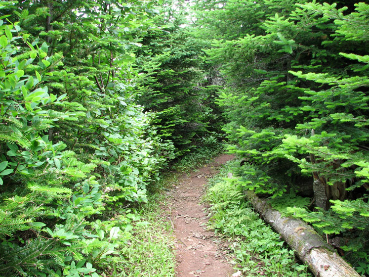 World Travel Photos :: Canada - Quebec - Bonaventure Island :: Quebec. Bonaventure Island (île Bonaventure) - a trail through the forest