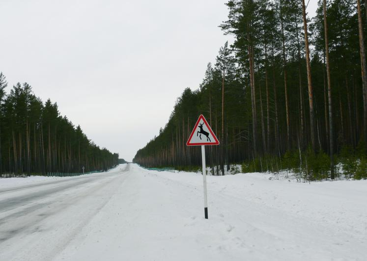 World Travel Photos :: Winter  :: A winter road in Tomsk district, Russia