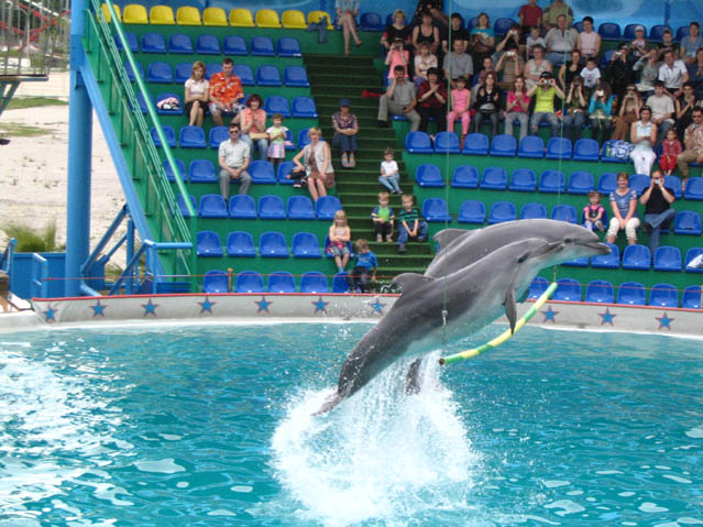 World Travel Photos :: Amusement & theme parks  :: Adler. Dolfinarium