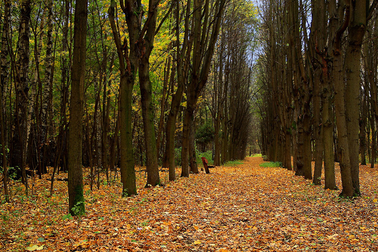World Travel Photos :: Fall views :: Moscow. A park in Kuskovo -