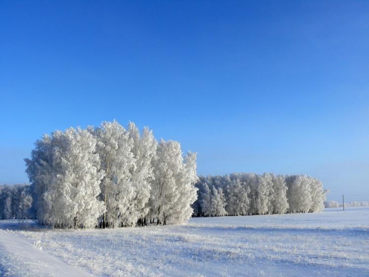 World Travel Photos :: Colors - Blanc :: Russia. Omsk District -a white fairy tale