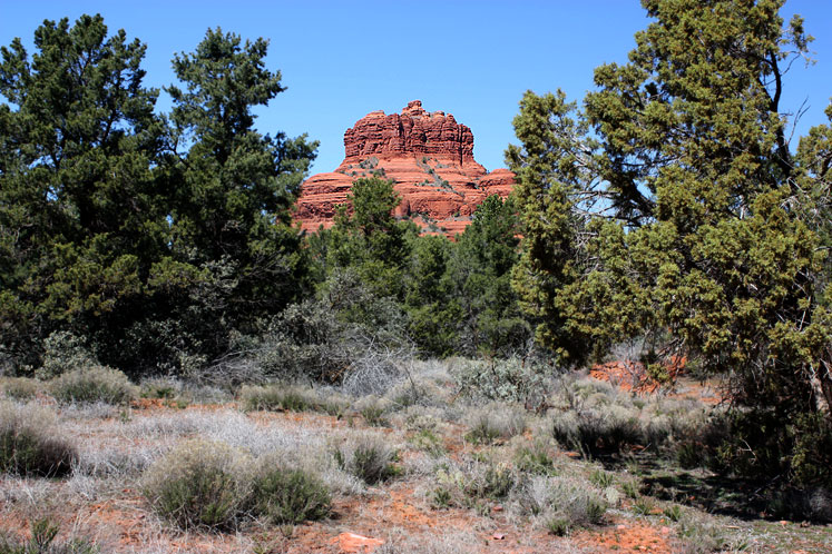 World Travel Photos :: USA - Arizona - Sedona :: Arizona. Sedona - Bell Rock in between trees