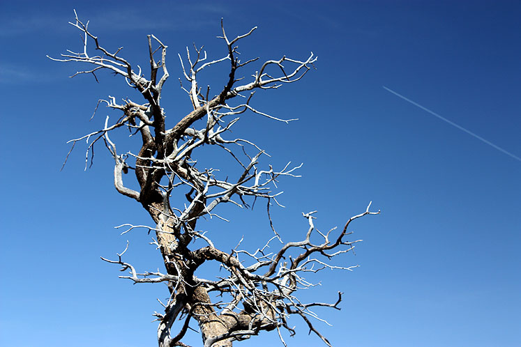 World Travel Photos :: USA - Arizona - Grand Canyon :: Grand Canyon - a bare tree and blue sky