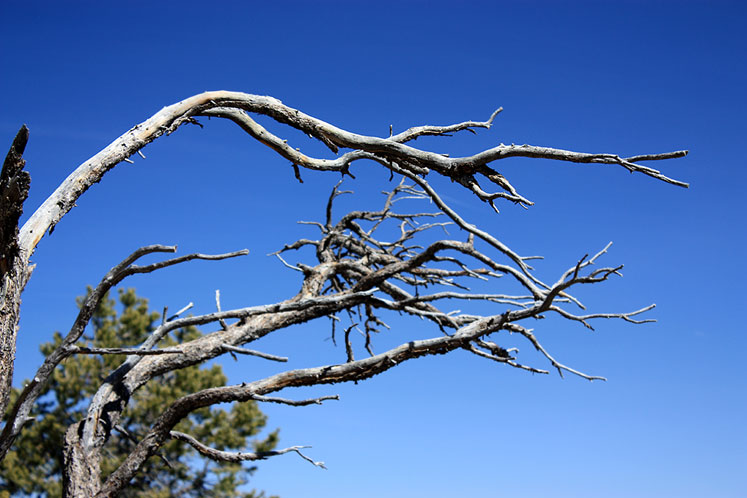 World Travel Photos :: USA - Arizona - Grand Canyon :: Grand Canyon - a bare branch
