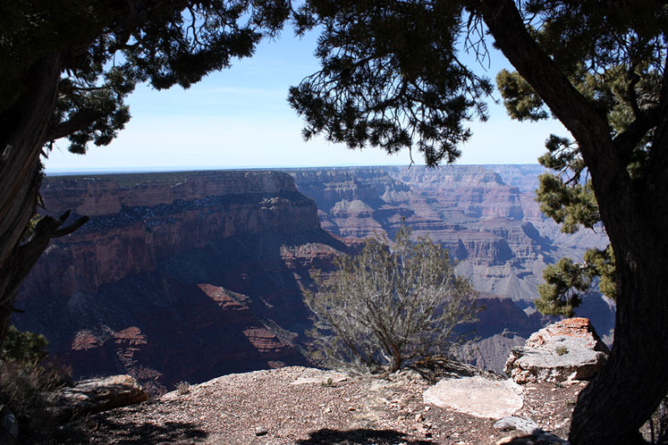 World Travel Photos :: USA - Arizona - Grand Canyon :: Grand Canyon - a view in between trees