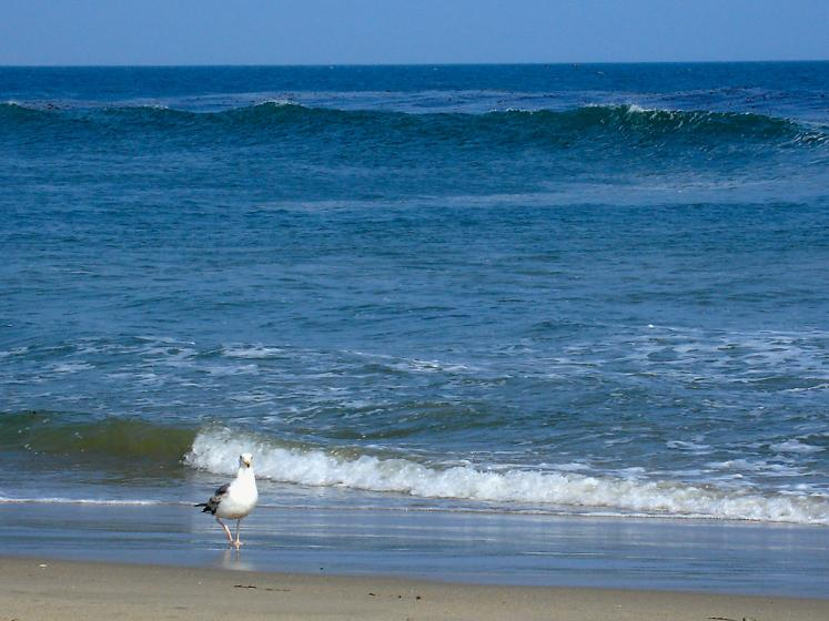 World Travel Photos :: Shurik :: Malibu. Ocean.
