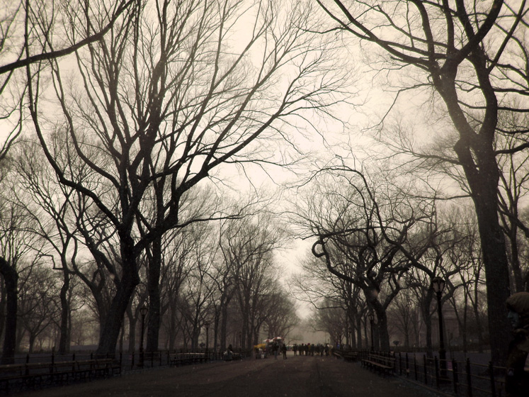 World Travel Photos :: Feel good photos :: New York City. An alley in Central Park
